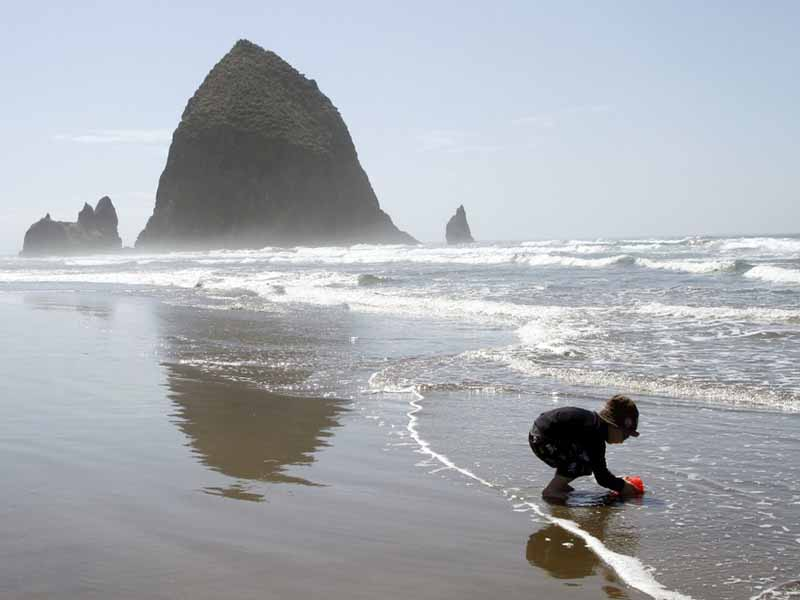 top 5 oregon beach wedding venues
